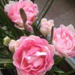 PLANTS – Spring Colour