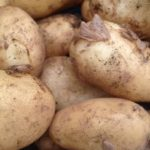 PRODUCE: New Potatoes Now in!