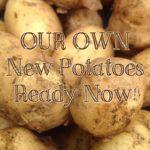 PRODUCE – New Potatoes!
