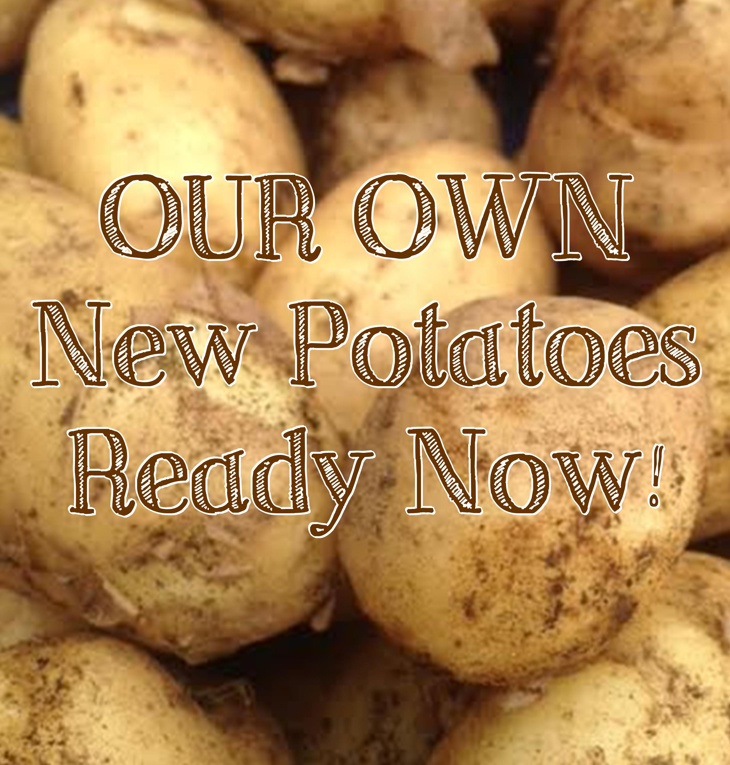 PRODUCE - New Potatoes!