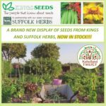 PLANTS: Seed from Kings & Suffolk Herbs