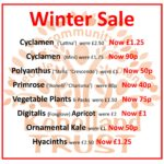 PLANTS: Winter Sale