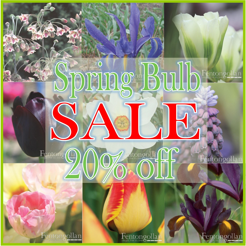 PLANTS: Spring Bulb SALE