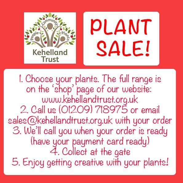 PLANTS: Sale!